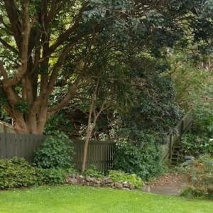Image for Garden Renewal