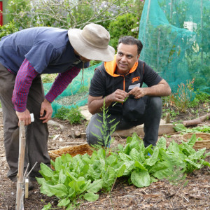 Image for Community Gardening
